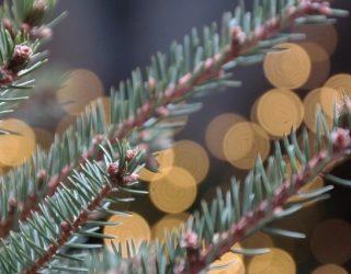 fir-tree-4718647_640